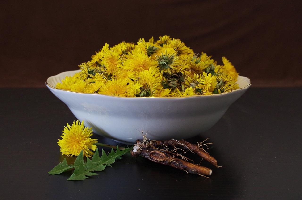 Pampeliška, květy, žlutá