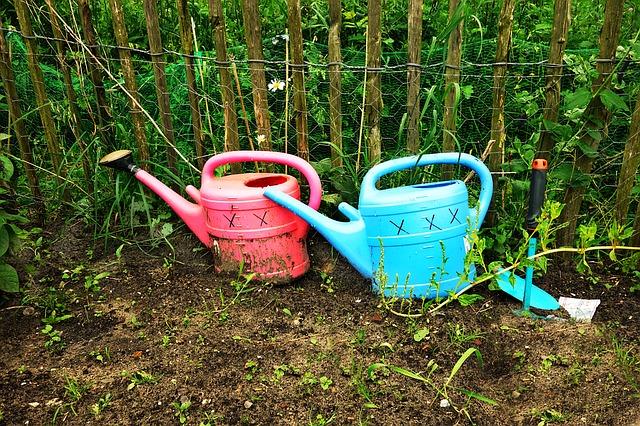 konev, zahrada, zahradničení, záhon