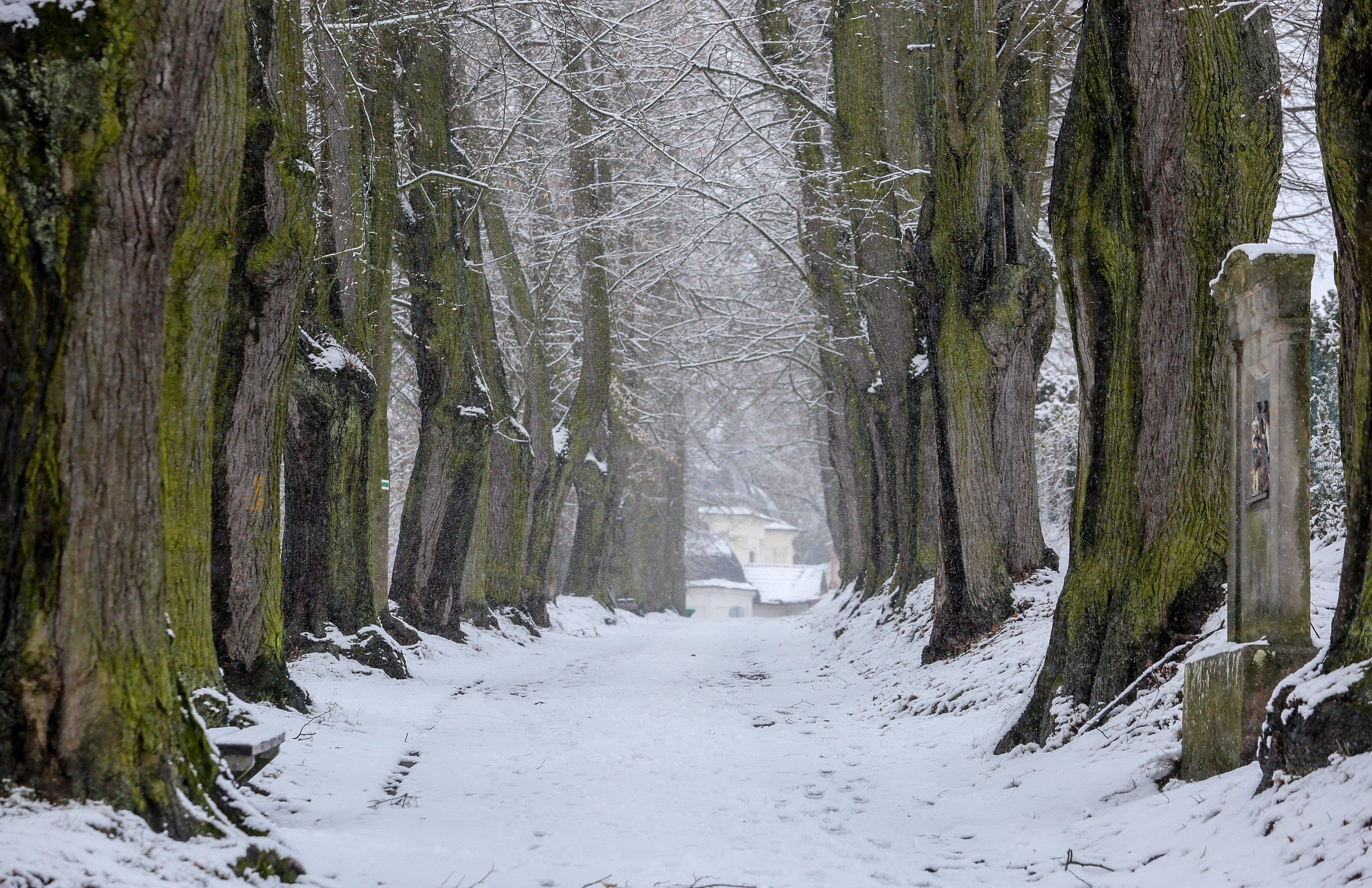 Klokotská alej v Táboře, stromořadí, sníh, zima, cesta