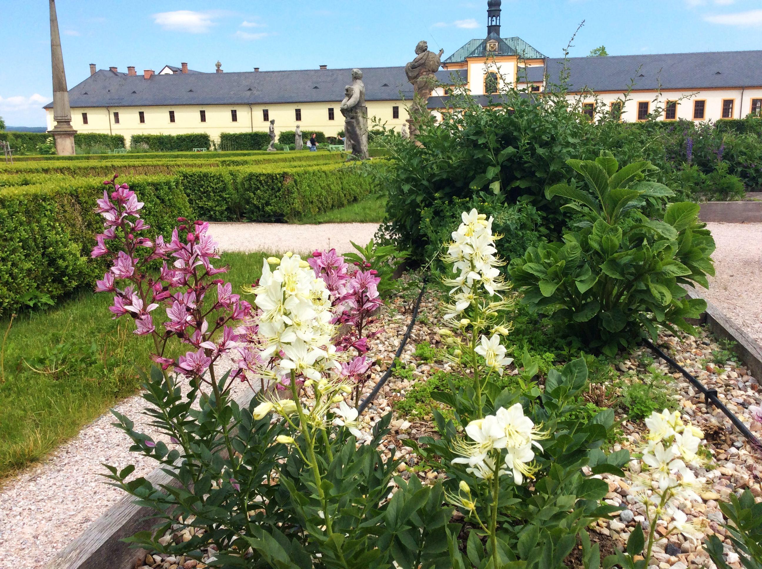 Bylinková zahrada v areálu hospitalu na Kuksu