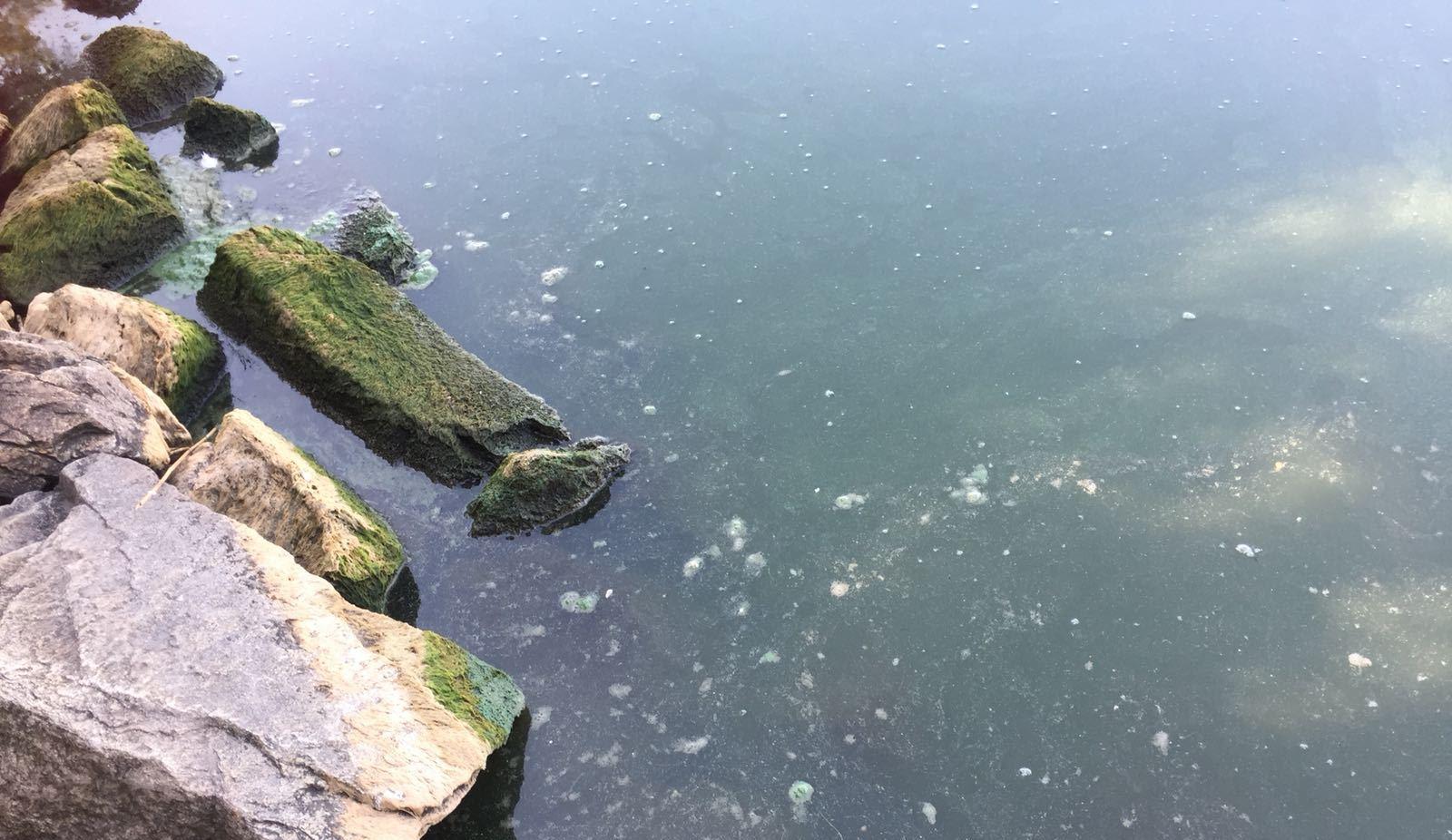 Jedním z rybníku, kde vědci sledují množství sinic, je Dehtář