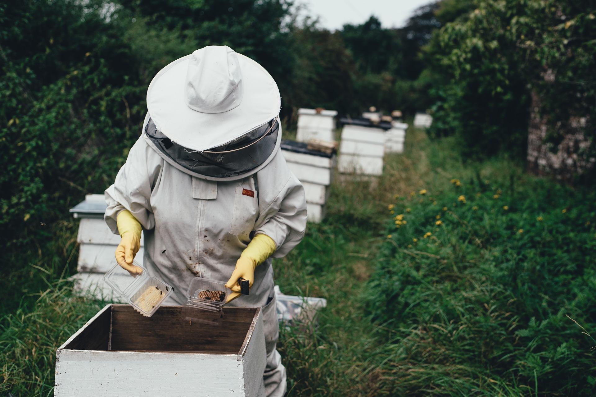 Jak jsou včelaři spokojeni s letošní medovou sezónou?