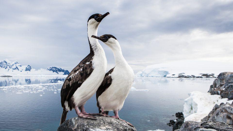 Fotografie Václava Šilhy. Antarktida