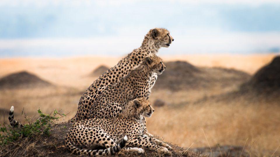 Fotografie Václava Šilhy. Rezervace Masai Mara v Keni