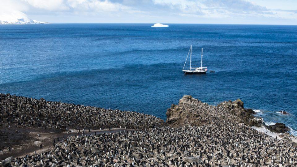 Fotografie Václava Šilhy. Jižní Sandwichovy ostrovy