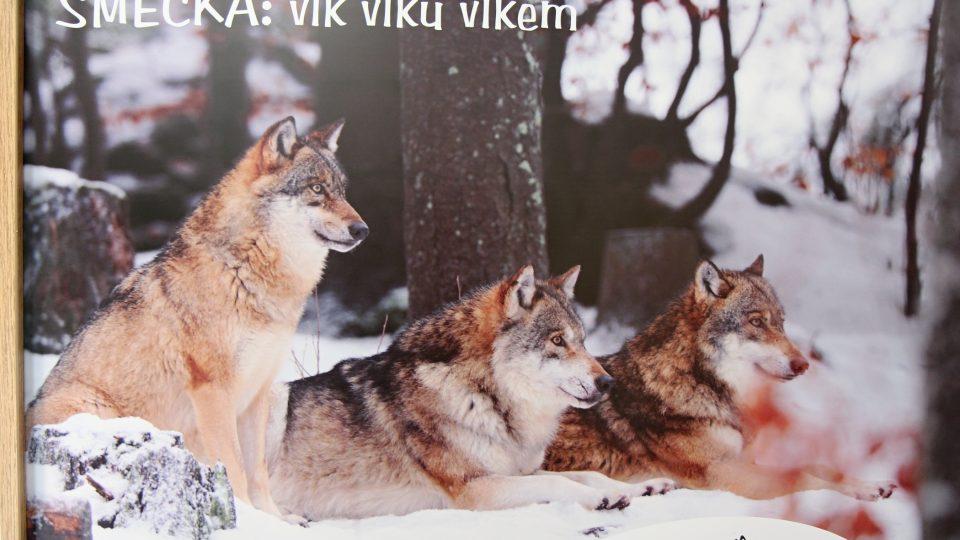 V této době návštěvníci mohou vidět kompletní rodinku. Mateřský pár tvoří vlčice z Německa a vlk z plzeňské zoo, letos na jaře se jim narodila tři vlčata