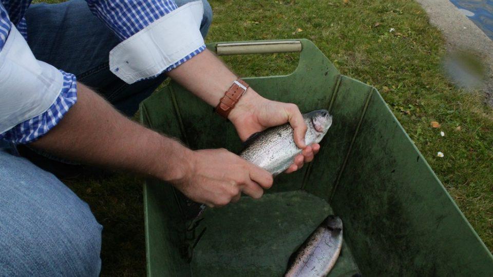 Do svého jídelníčku pravidelně zařaďte ryby, vybírejte sladkovodní i možské
