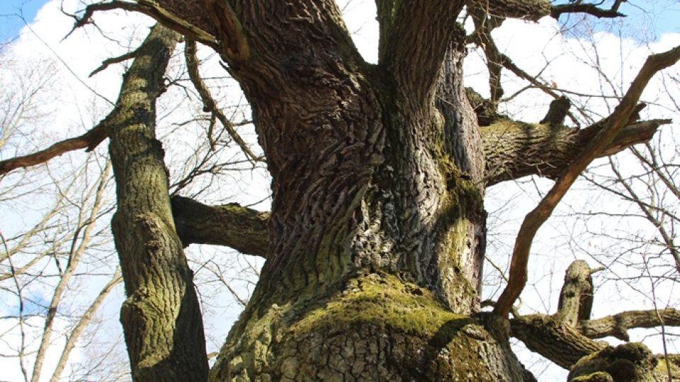 Čertův dub, nazývaný také Krčínův, stojí na hrázi bývalého rybníka Hrádečku. Podle pověsti zde skončilo prokletí Jakuba Krčína