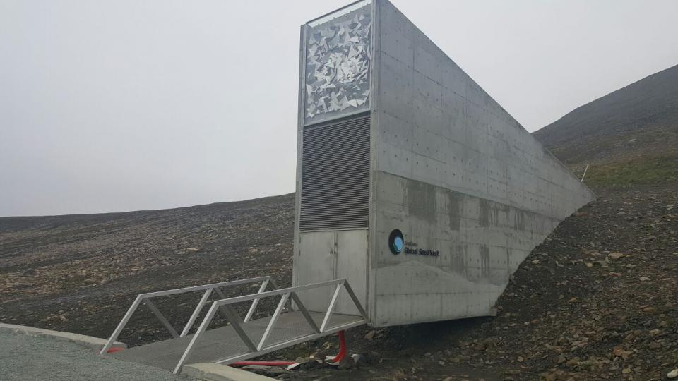 Globální úložiště semen v Arktidě - v kopci se skrývají stovky metrů chodeb a upravené prostorné sály. Zde jsou v regálech uložena semena v utěsněných sáčcích