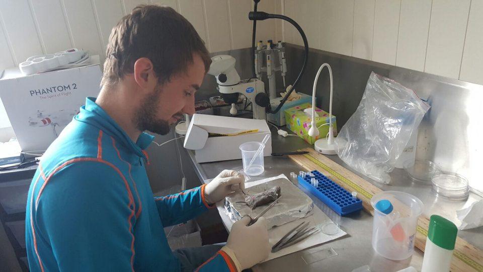 Marek Brož v laboratoři v městečku Longyearbyen pitvá hraboše. Hledá parazity, které mohou ohrozit člověka