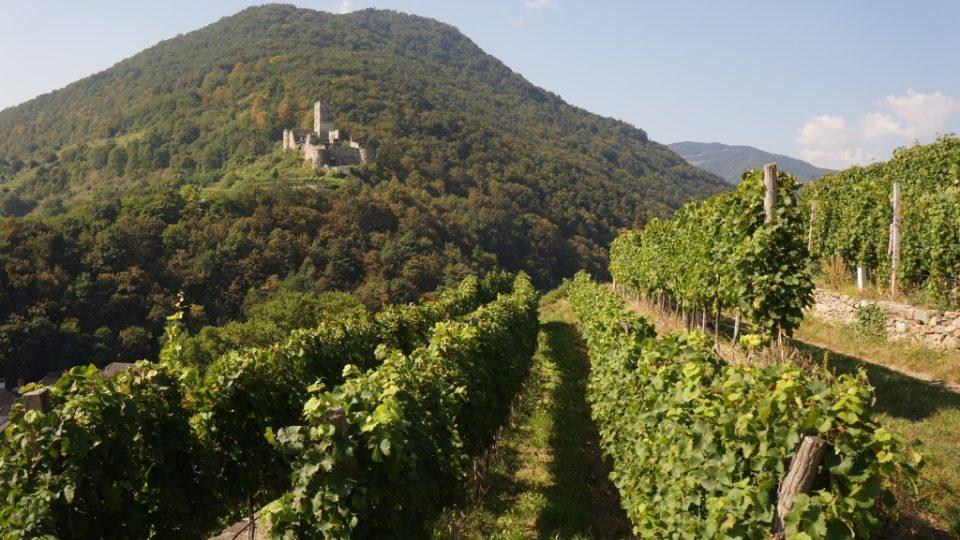 Vinařskou oblast Wachau v Rakousku si můžete prohlédnout se speciálně vyškolenými průvodci