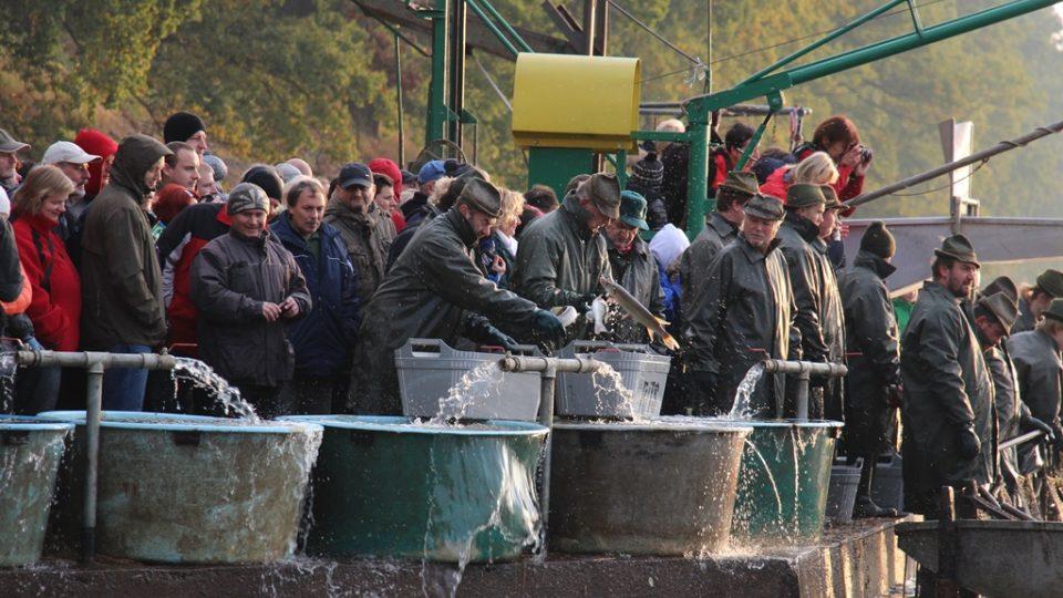Výlov rybníka Rožmberk na Třeboňsku v říjnu 2016