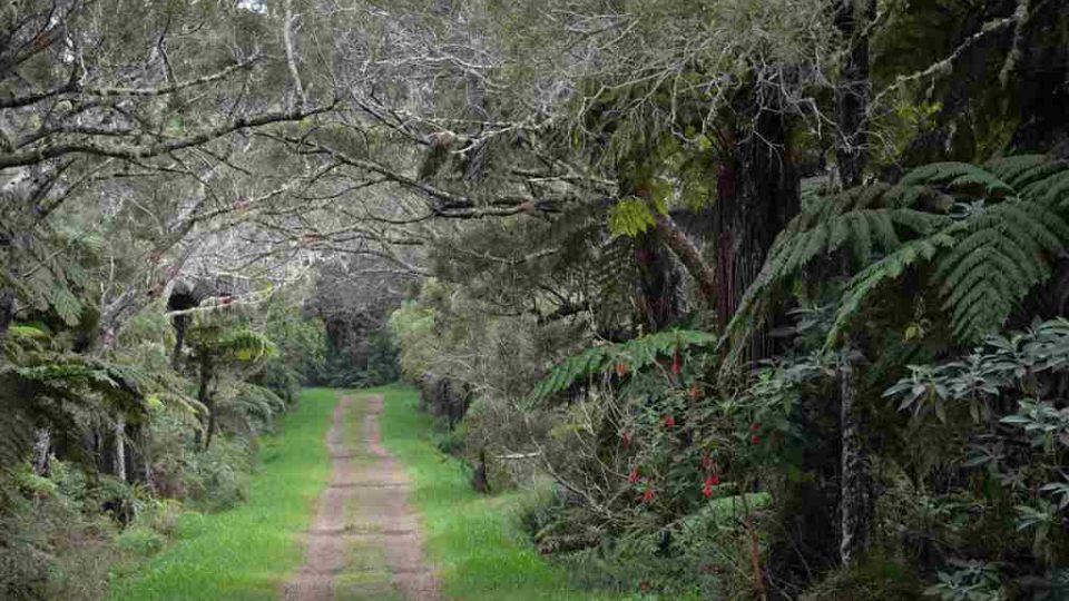 Les akácií na ostrově Reunion