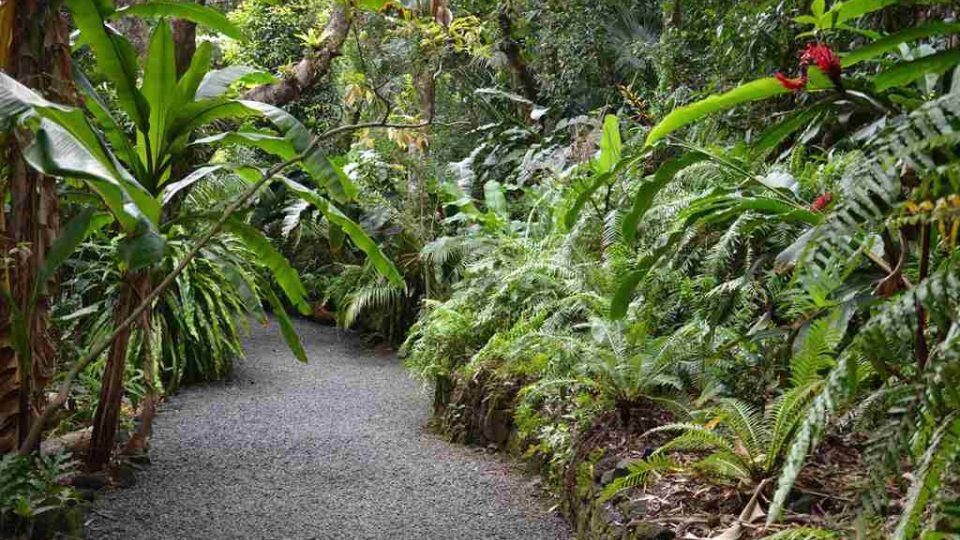Zahrada koření a vůní na ostrově Reunion - kulturnější, méně zarostlá část zahrady
