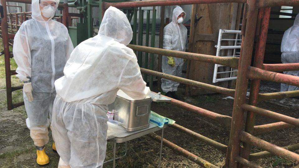 Veterináři a vojáci cvičili v Boleticích zásah při nebezpečné nákaze zvířat