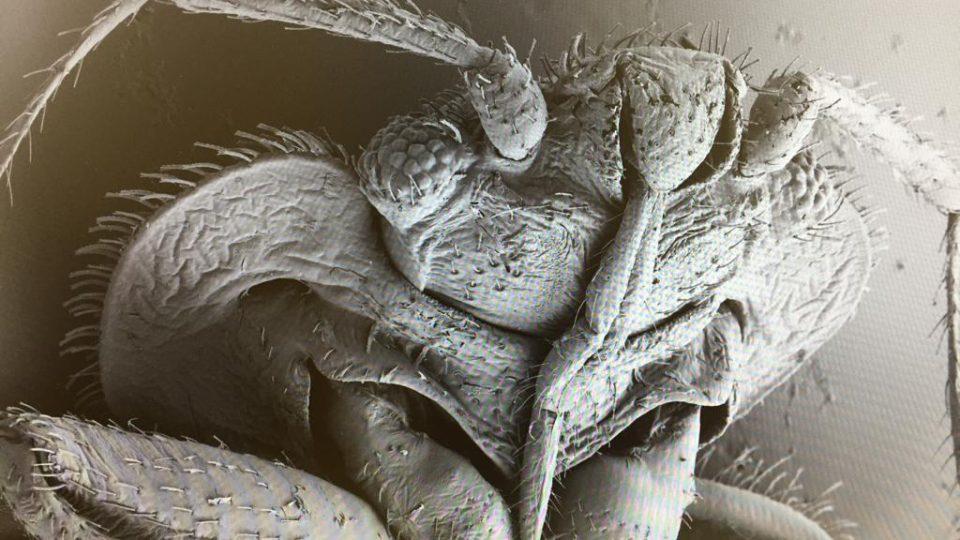 Nejnovější elektronový mikroskop za více než 15 milionů korun používají vědci v Českých Budějovicích, nabízí jim široký rozsah zvětšení třeba při pohledu na klíšťata