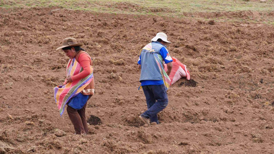 Oblast okolo peruánského města Cuzco je považována za typicky bramborářskou. Pavel Chlouba se tu vydal za poznáním na nefalšovaný venkov