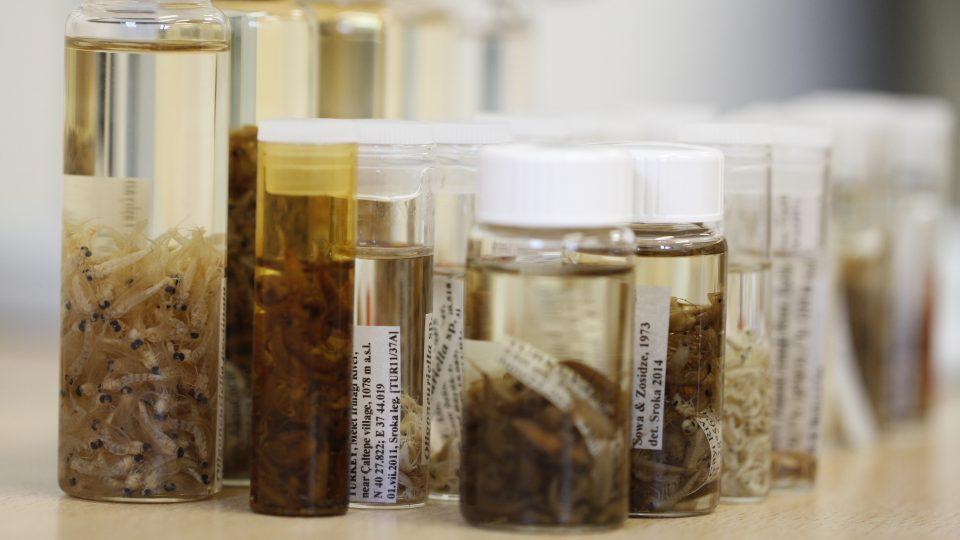 Vzorky z výzkumu jepic v pohoří Kavkaz v laboratoři Biologického centra Akademie věd v Českých Budějovicích