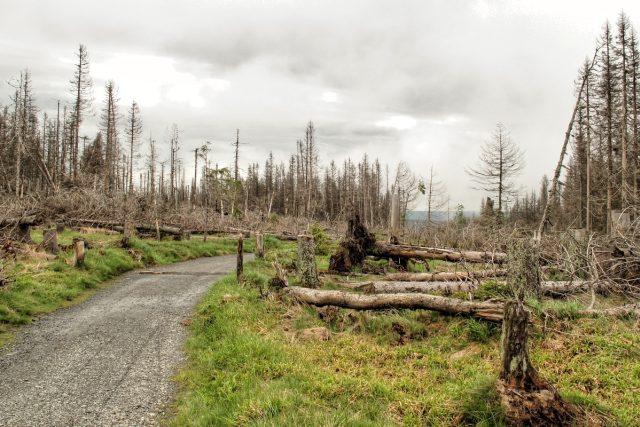 poškozený les u lokality Na Ztraceném u Modravy