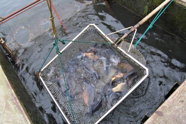Sádky Zpracovny ryb Klatovy