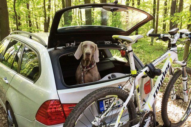 Pes cestuje v autě na dovolenou
