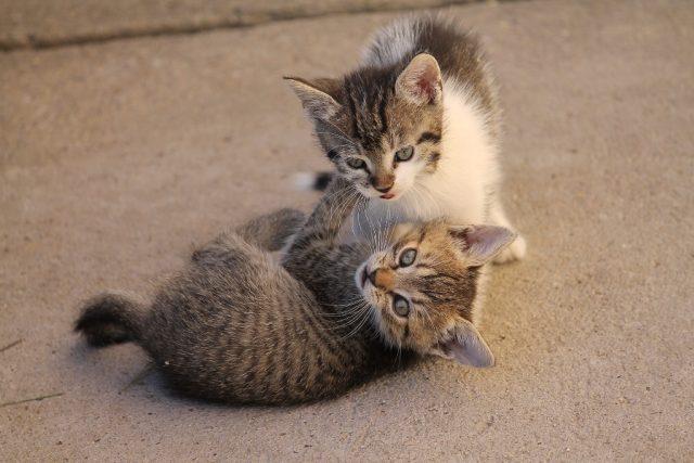kočka, kočky, kotě