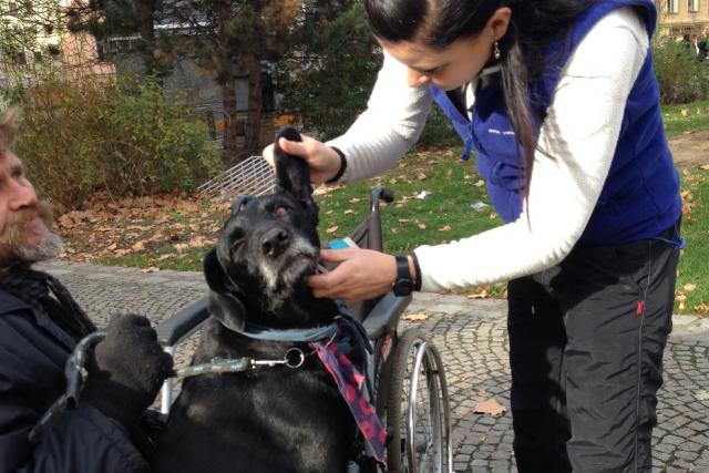 Veterinářka Veronika Krepsová očkovala v Budějovicích psy bezdomovců