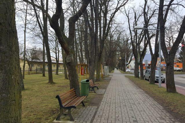 Kaštanová alej v centru města k Velenicím neodmyslitelně patří, stromy jsou ale v dezolátním stavu