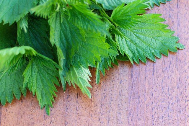 Kopřiva, kopřivy, zelené byliny
