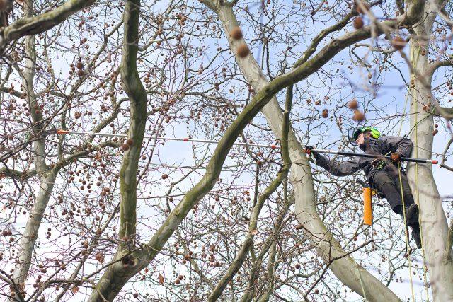 Lezci shazují v Chrudimi havraní hnízda