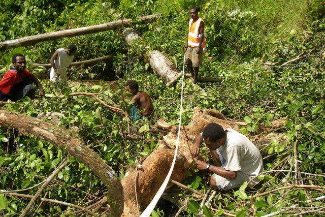 Při sběru mravenců v pralese pomáhají vědcům domorodí Papuánci