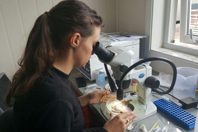 Studentka Nikol Kmentová v laboratoři v městečku Longyearbyen na Špicberkách | foto: Romana Lehmannová,  Český rozhlas