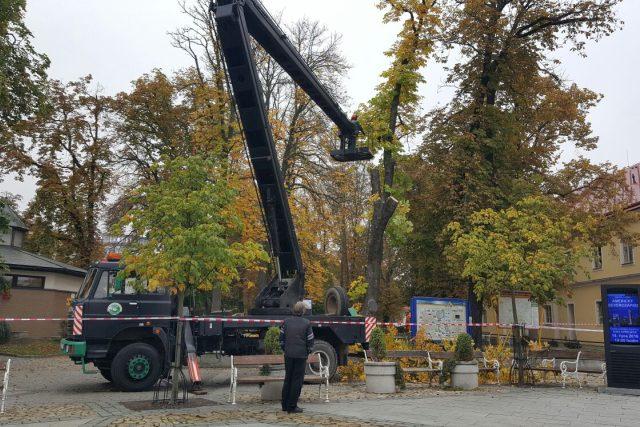 V centru Jindřichova Hradce jde k zemi devatenáct stromů. Začala dlouho plánovaná revitalizace Husových sadů | foto: Lucie Hochmanová