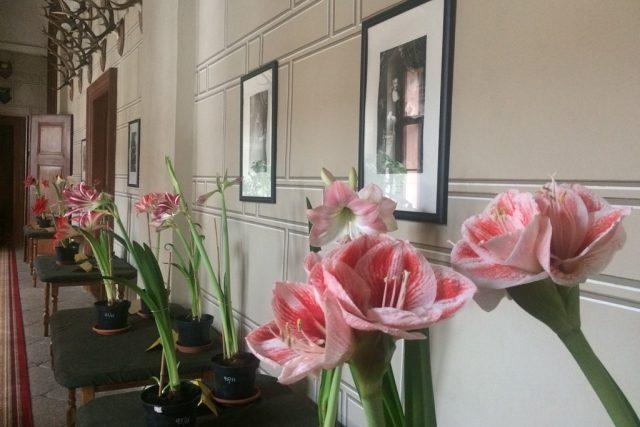 Výstava Amarylis ve společenství květin renesance na zámku v Třeboni