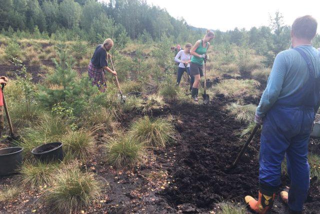 Dobrovolníci pomáhají s obnovou Soumarského rašeliniště na Šumavě