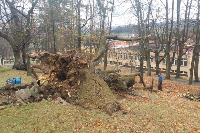 Vichřice napáchala škody i na dalších místech kraje. Ve Vlachově Březí neodolala náporu větru památná lípa u Svatého Ducha
