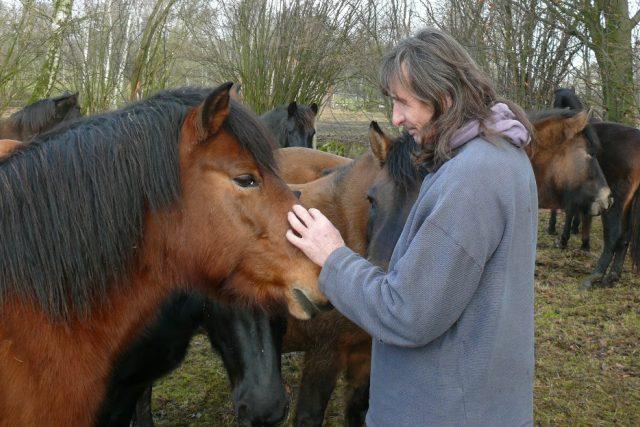 Vladimír Vopravil chová na své farmě v Cunkově huculské koně