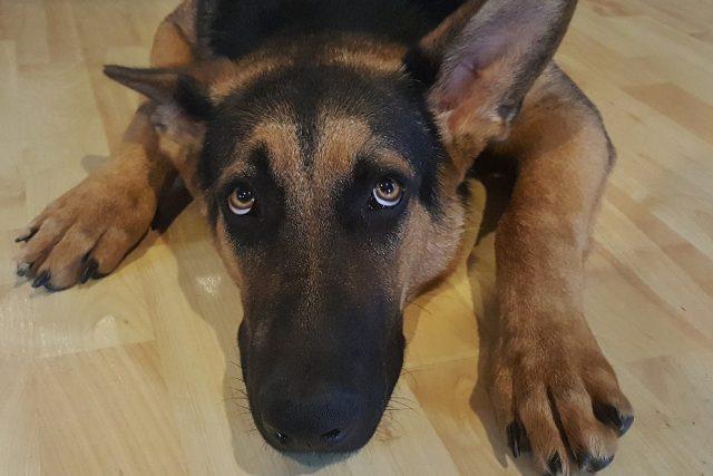 Vystrašený pes | foto: Fotobanka Pixabay