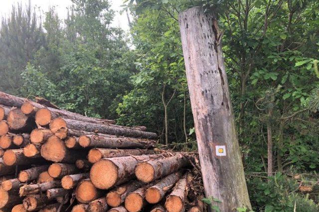 Turisté se snaží s majiteli lesů dohodnout,  aby při těžbě dřeva zachovali turistické značení. Ne vždy je to ale jednoduché | foto: Jitka Cibulová Vokatá,  Český rozhlas,  Český rozhlas