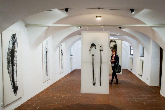 Výstava děl Petra Nikla s názvem Z jedné vody načisto v Rabenštejnské věži v Českých Budějovicích