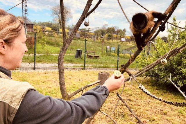 Ošetřovatelka Eva Krejčová s malpou hnědou v Zoo Tábor