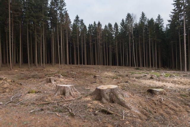 Na les nedaleko Nasavrk je smutný pohled