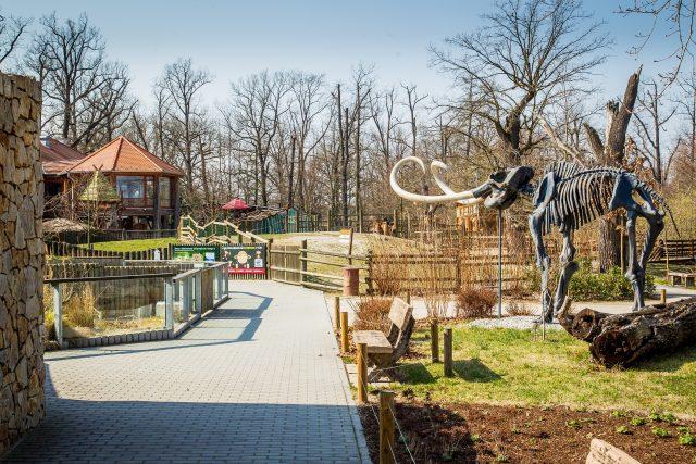 Zoo Hluboká se v době pandemie koronaviru vylidnila   foto: Petr Lundák,  MAFRA / Profimedia