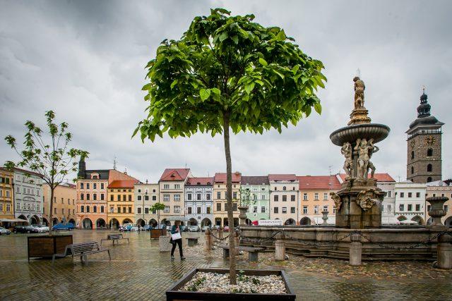Stromy ve velkých květináčích na náměstí v Českých Budějovicích, Samsonova kašna, Černá věž, zeleň České Budějovice