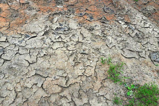 Dlouhodobé sucho trápí některé farmáře v Plzeňském kraji