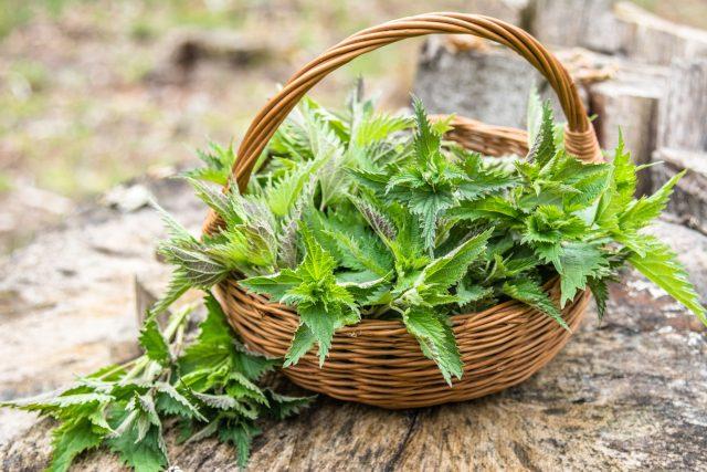 Kopřivy, košík, jarní byliny