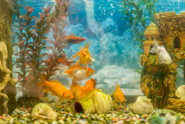 Akvarijní rybičky, akvárium, akvaristika, neonky