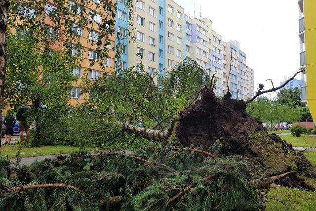Následky bouřky v Českých Budějovicích | foto: Andrea Poláková,  Český rozhlas,  Český rozhlas