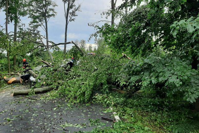 U Čížové na Písecku spadl strom na auto a usmrtil dva lidi | foto: Policie České republiky