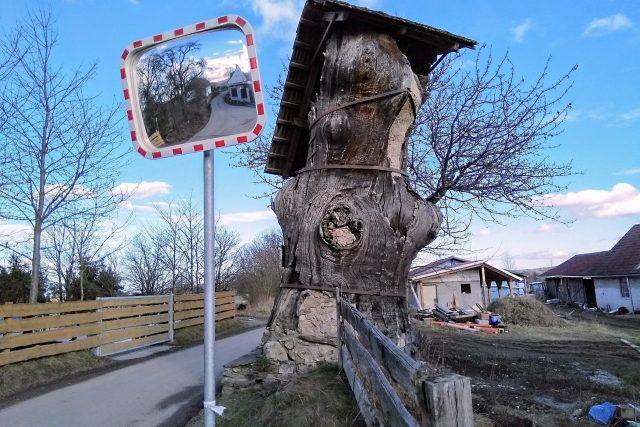 Dub v Opalicích u Kamenného Újezdu. Průměr kmene má bezmála tři metry, obvod přes osm metrů a jeho čtyřmetrový zastřešený kmen je uvnitř vyzděný